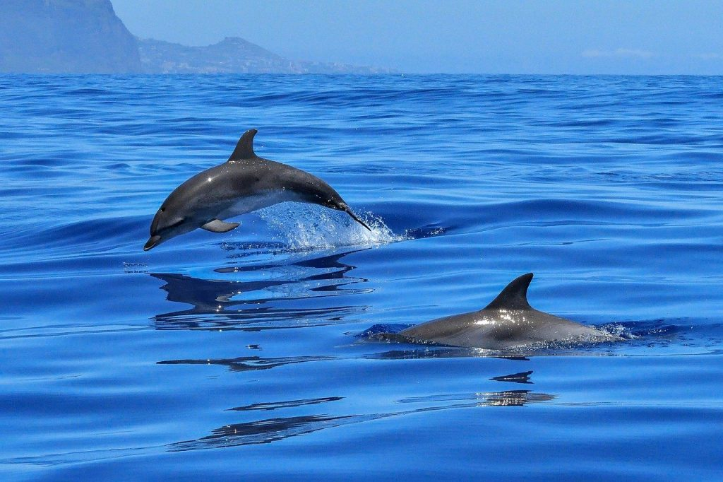 Asinara - L'isola è il santuario dei cetacei - The island is the cetacean sanctuary