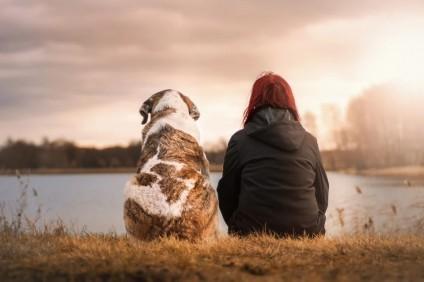 Nella Giornata mondiale del cane richiesta più attenzione