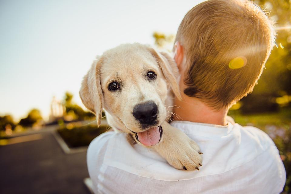 La Giornata mondiale del cane è nata in America