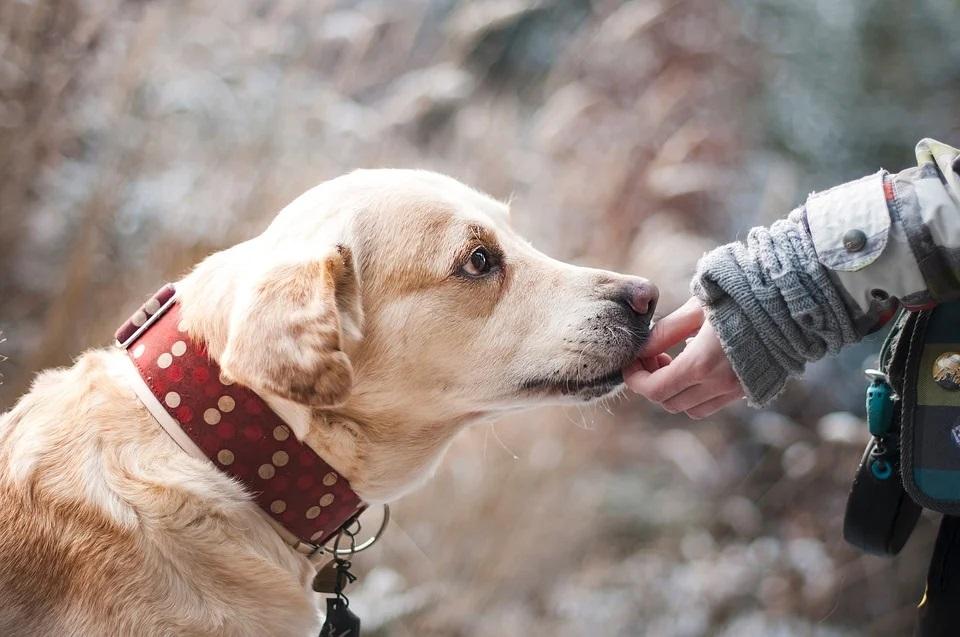 Giornata mondiale del cane si celebra il 26 agosto