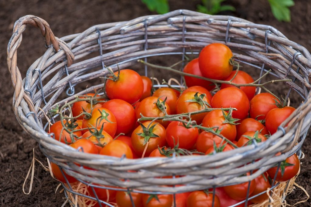 cestino con pomodori