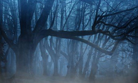 Nella foto un bosco con la nebbia e le strane creature