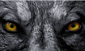 Il licantropo - Occhi lupo mannaro.