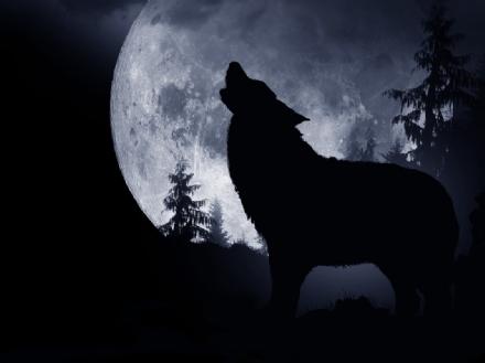 Il licantropo - Il lupo e la luna piena