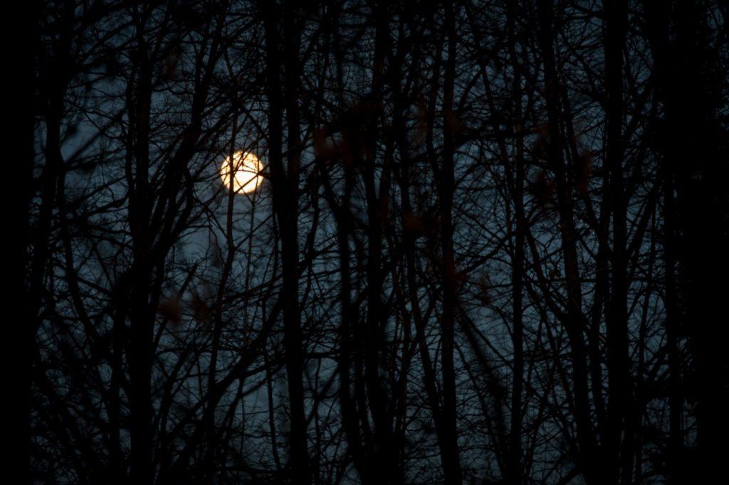 Monachello - Nella foto un bosco con la luna di notte.