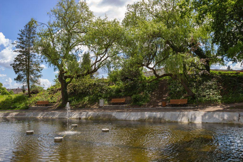 albero - un parco cittadino