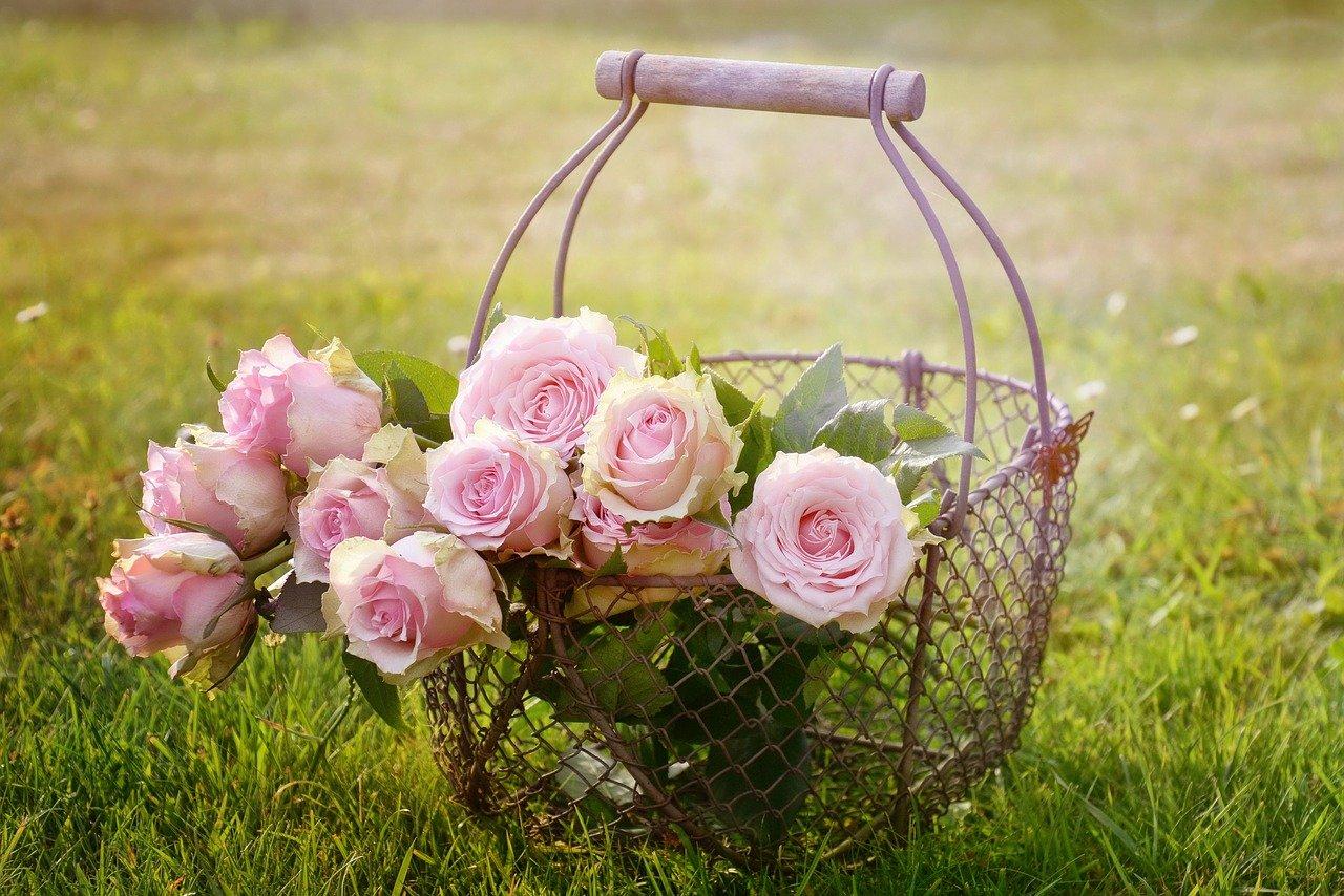 Giornata mondiale della gentilezza - rose in cestino