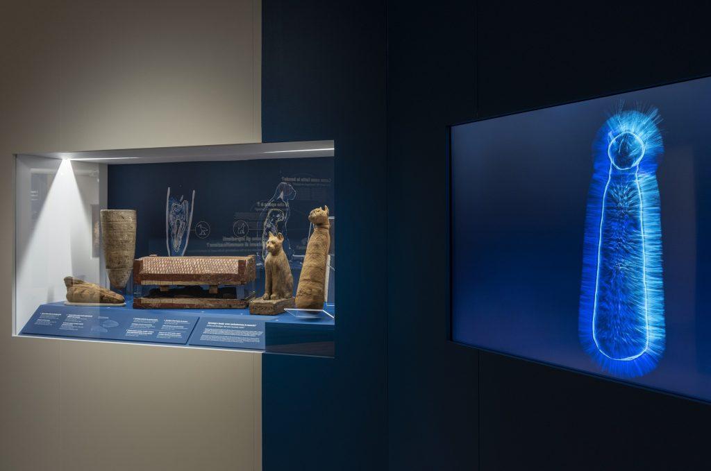 Museo Egizio mummie animali