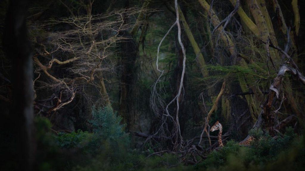 """Jurassik Park"" di Roberto Marchegiani (Ph. ©Facebook / Nature Photographer Of The Year)"