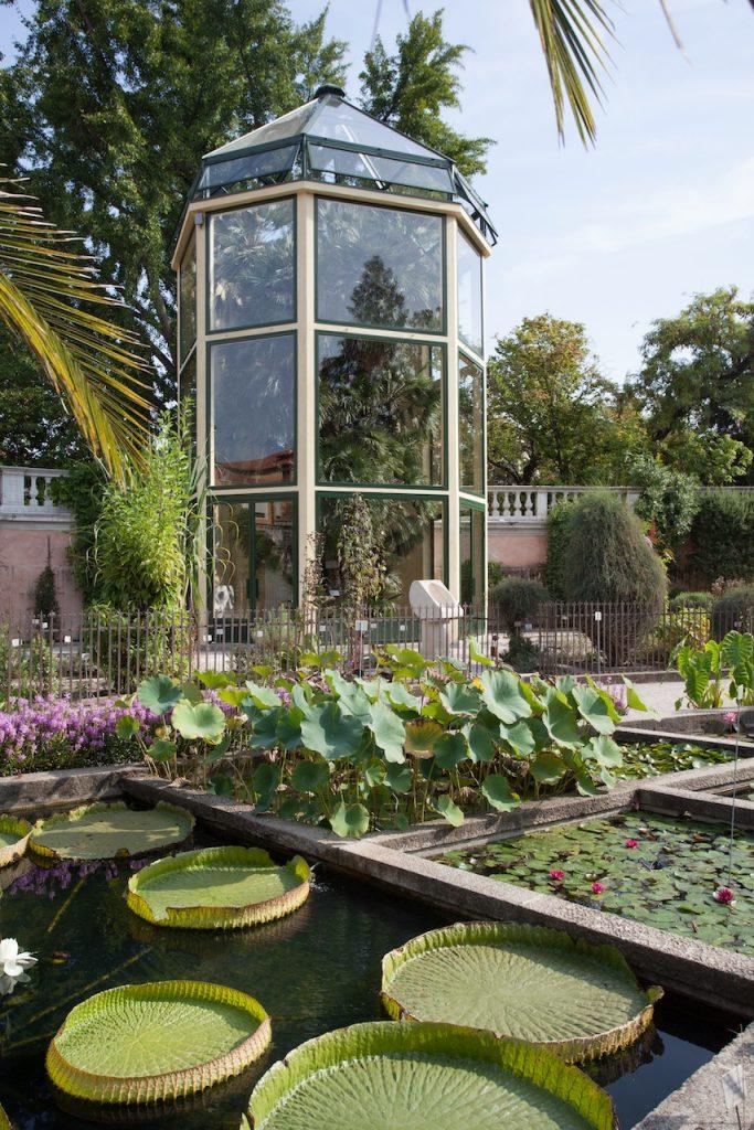 Orto Botanico - particolare