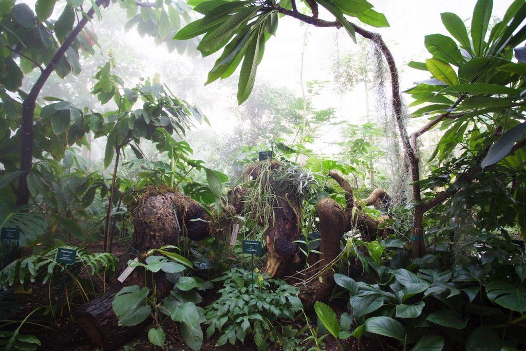 tropicale interno