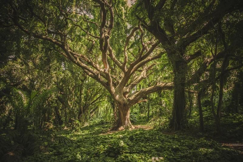 Giornata della Terra - albero nella natura