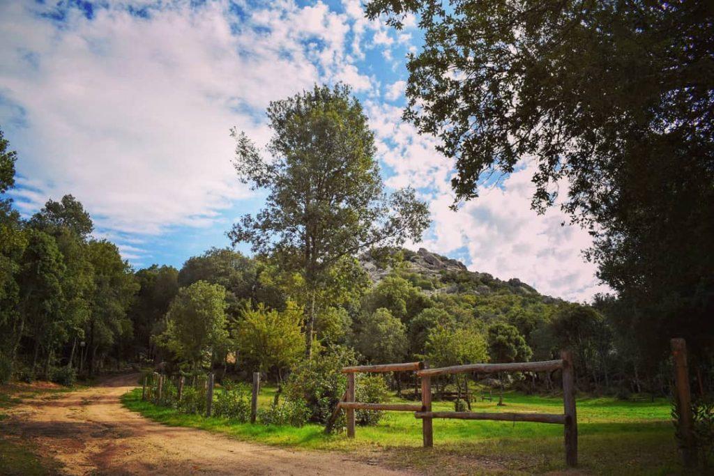 ollolai - campagna con albero