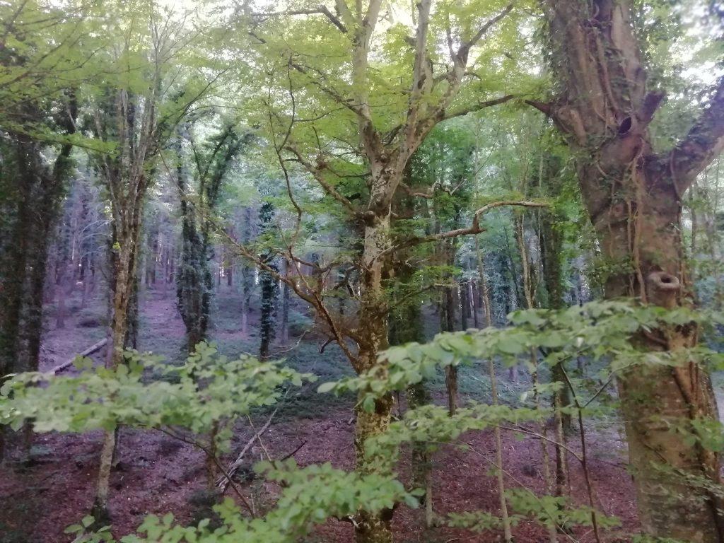 nel folto della Foresta Umbra
