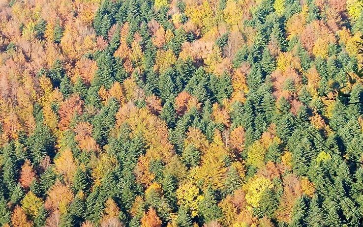Green List - Parco Nazionale delle Foreste Casentinesi