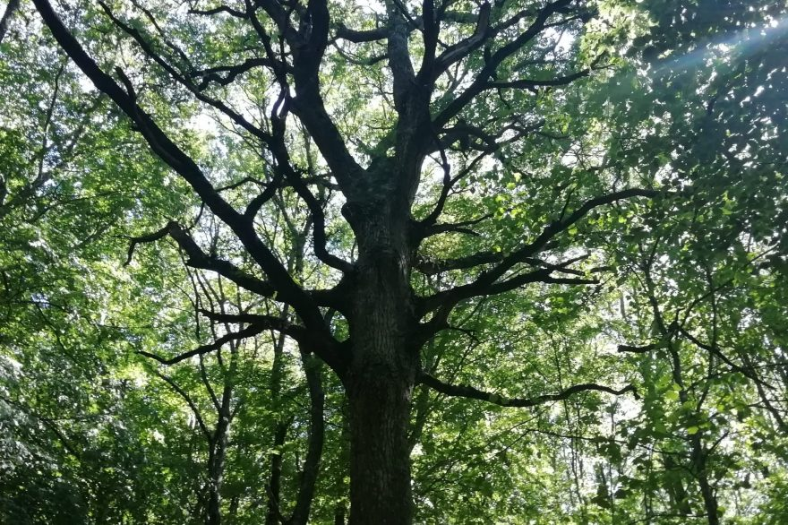 particolare foresta umbra