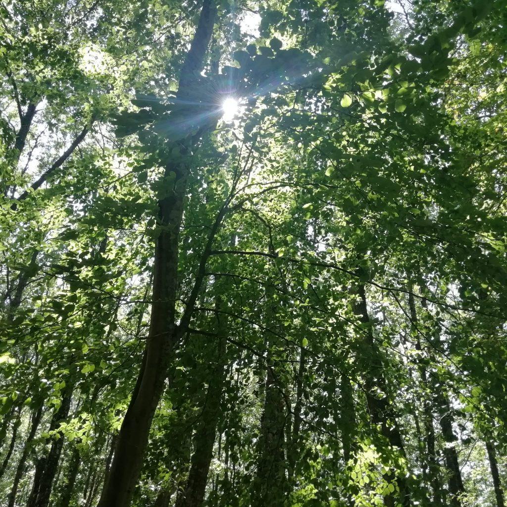 il bosco della Foresta Umbra