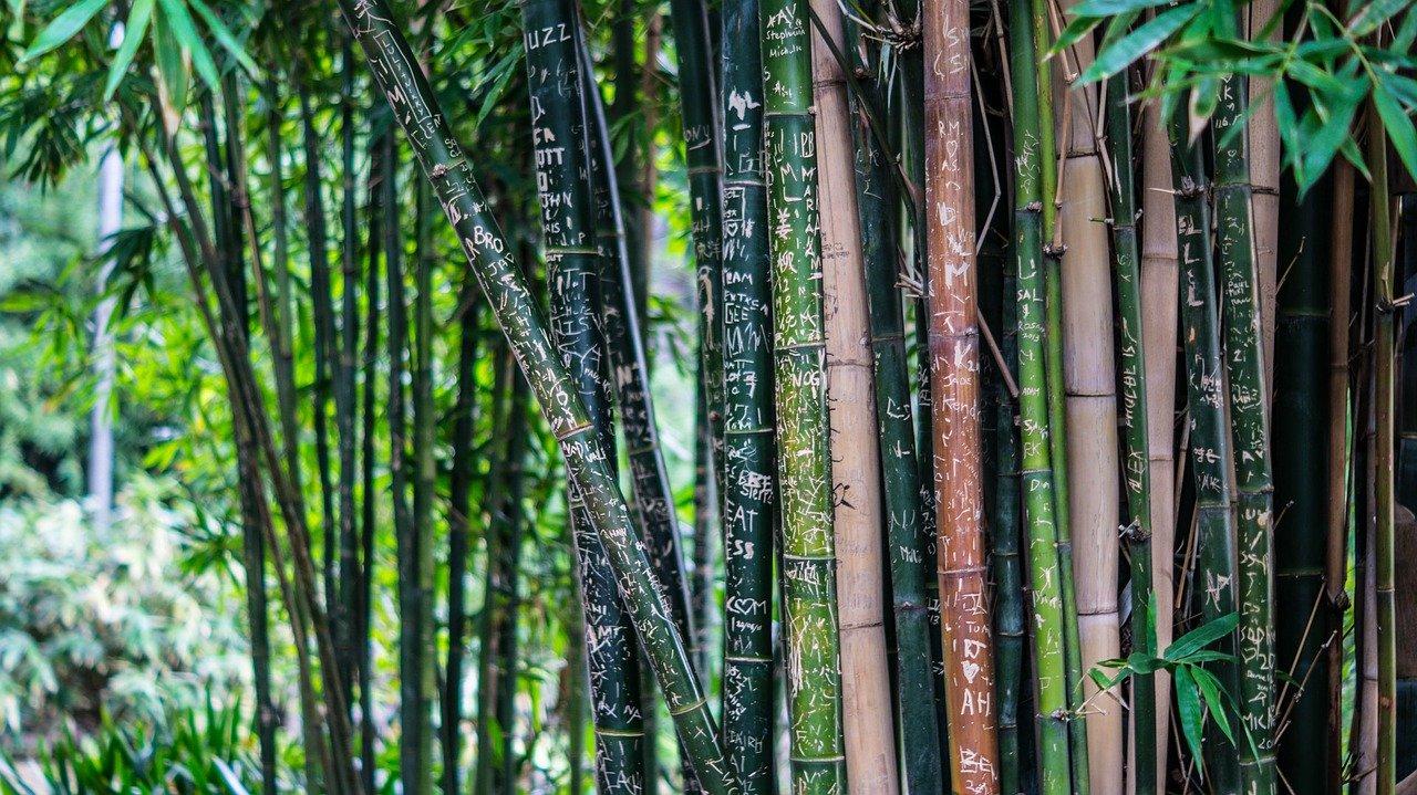foresta italiana di bambù