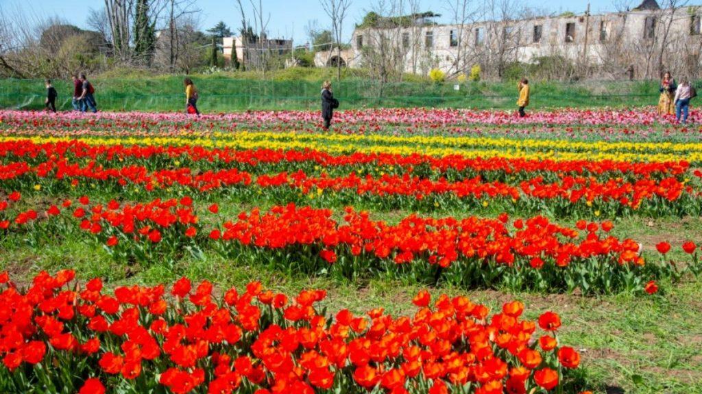 tulipark - tulipani colorati
