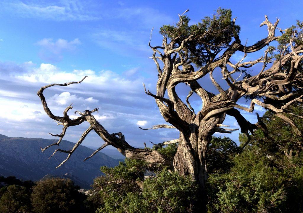 Sentiero dei Parchi - Una vista di Orosei