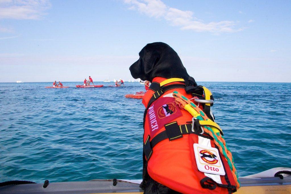 Scuola Italiana Cani Salvataggio - Labrador nero su pattino da bagnino a Mondello