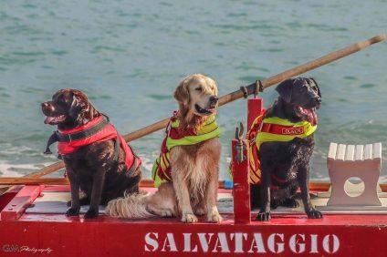 Scuola Italiana Cani Salvataggio -Tre labrador da salvataggio su pattino da salvataggio