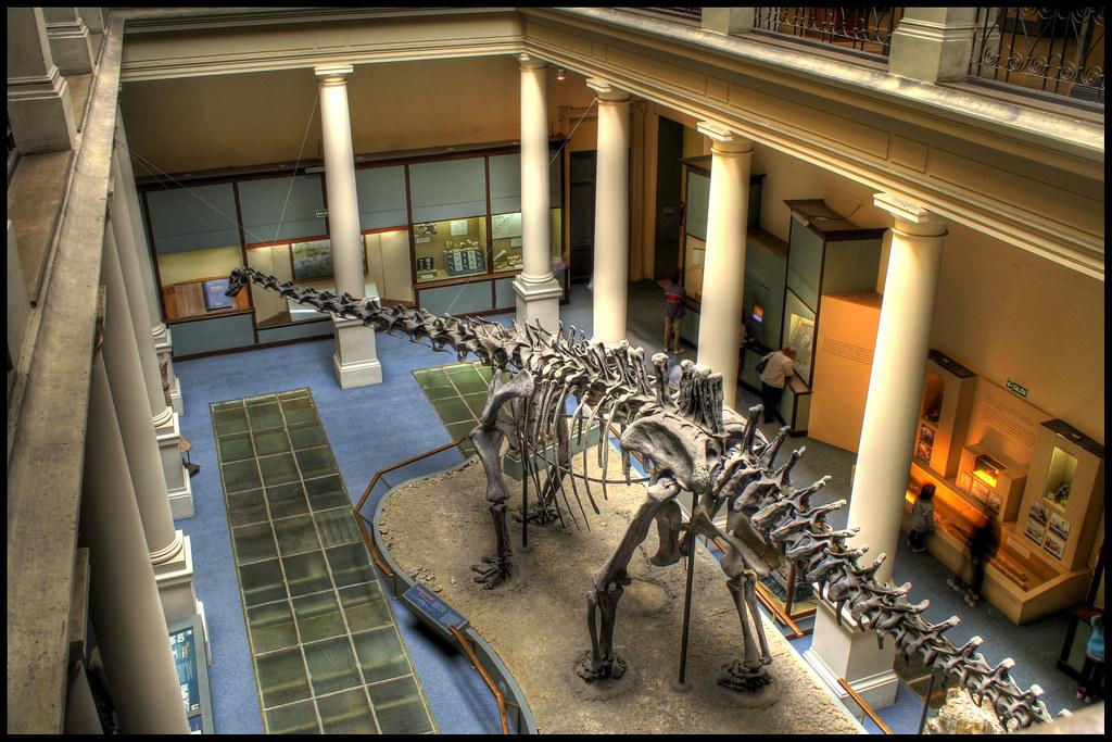 museo - Dinosaurio Diplodocus