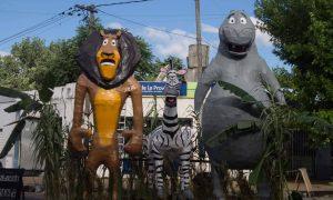 Despedir el año - Momo Madagascar