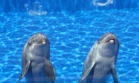 Cropped Delfines En El Aquarium 1.jpg