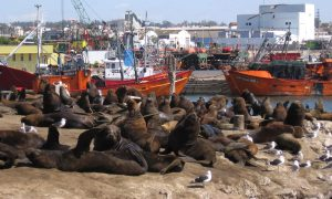 Cropped Lobos Marinos Mar Del Plata.jpg