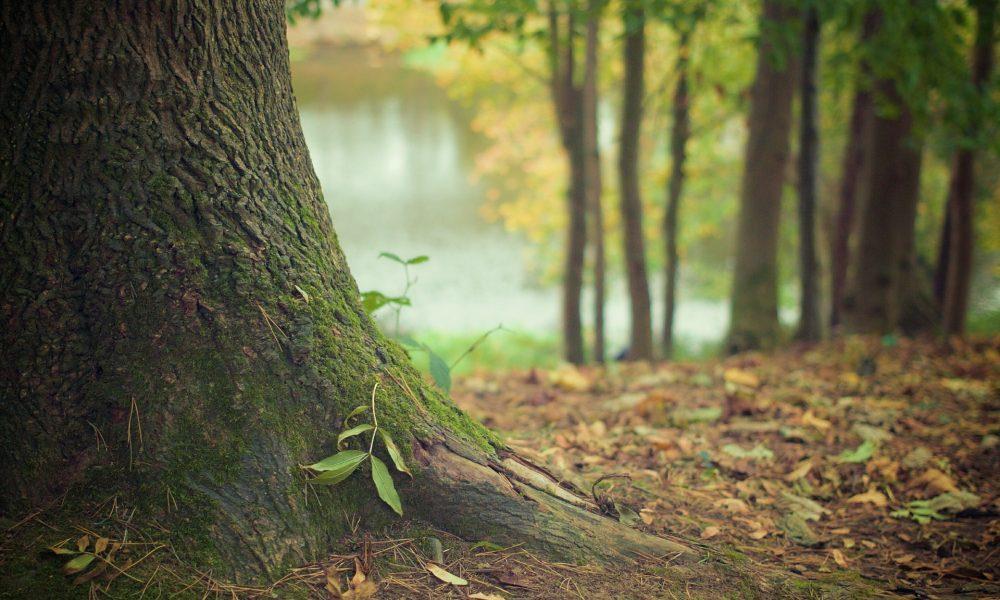 Bosque Peralta Ramos - entrada al bosque