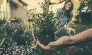 naturaleza - Cuidado Del Jardin