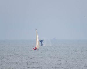 Ballenas - Costa con ballenas.