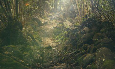 duendes - selva Misionera