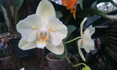 Flores Tipicas De Misiones