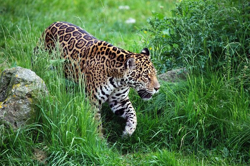 Animal - En La Selva