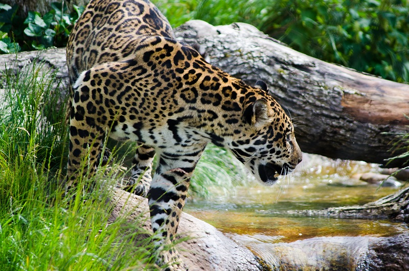 Monumentos - Jaguar
