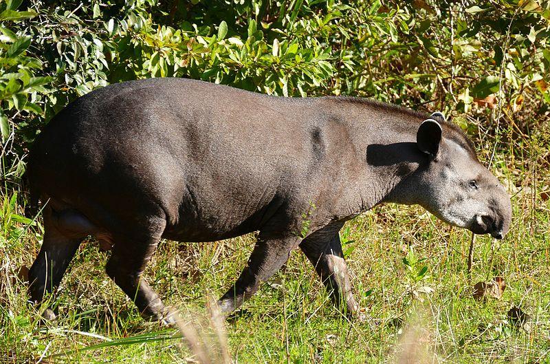 Monumentos - Tapir