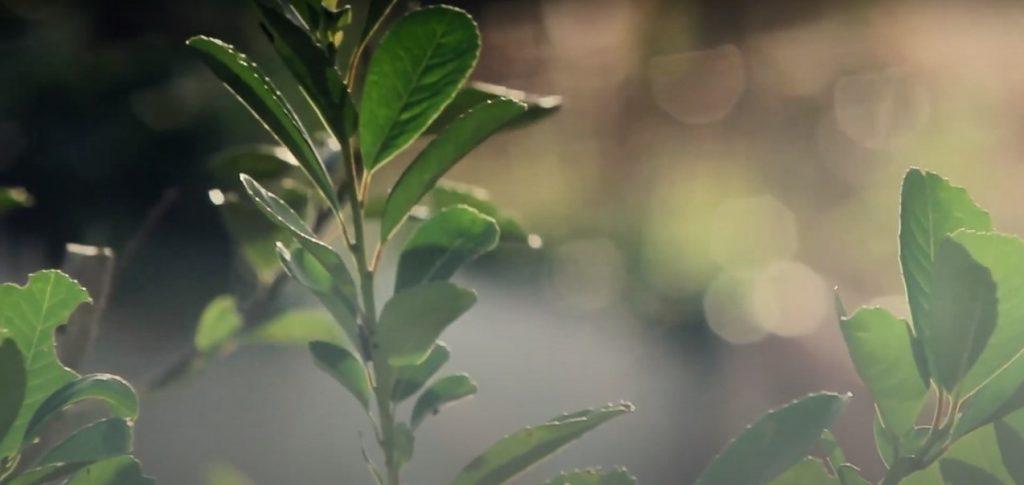 documentales - hojas de yerba