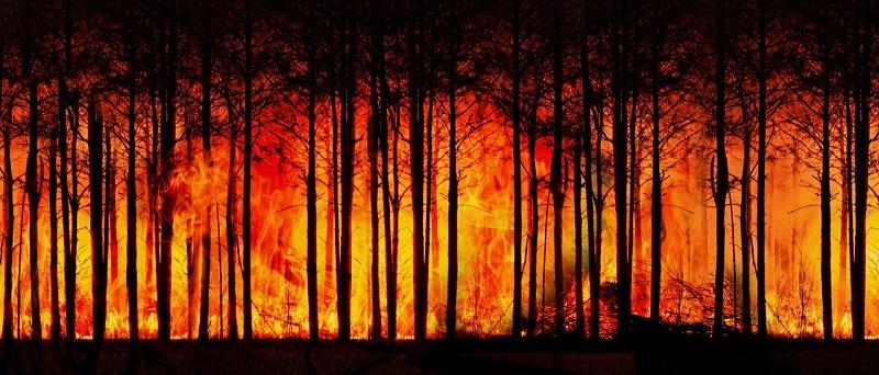 protegidas - Incendio
