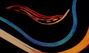 New Weve - musica