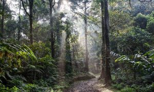 áreas protegidas - Selva