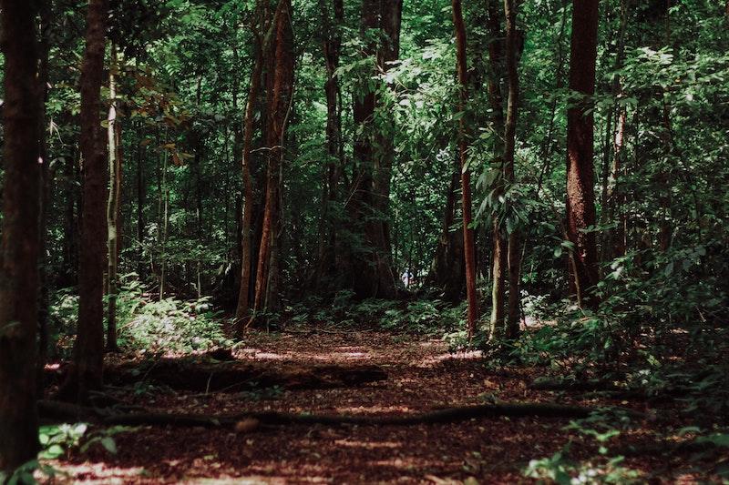 red - Camino Y Selva