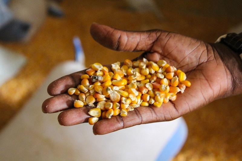 Karaí Octubre - maíz