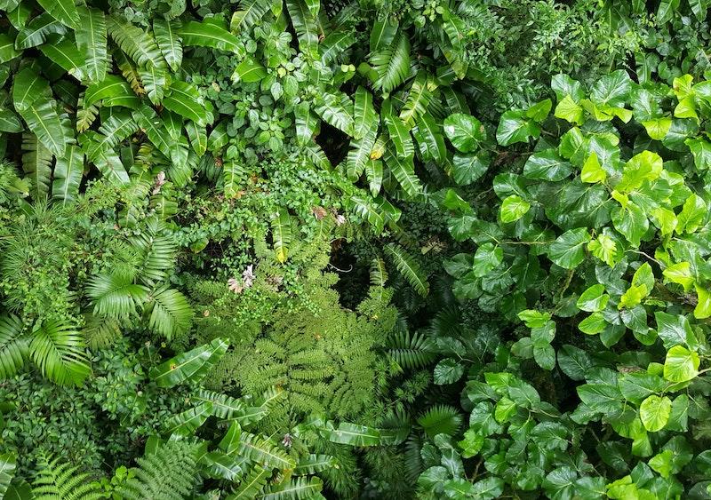 red - Plantas En La Selva