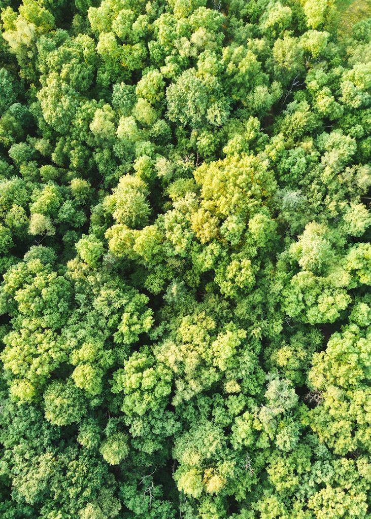 red - Selva Vista De Arriba
