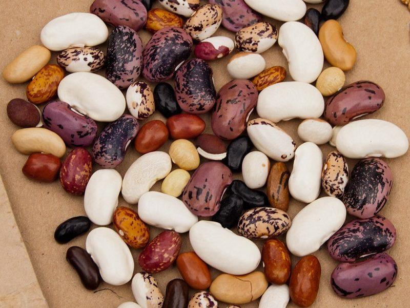 Karaí Octubre - semillas