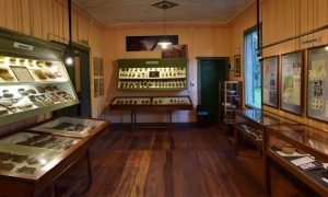 prehistoria - Museo