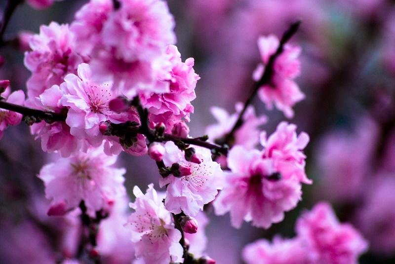 Pastafrola - primavera