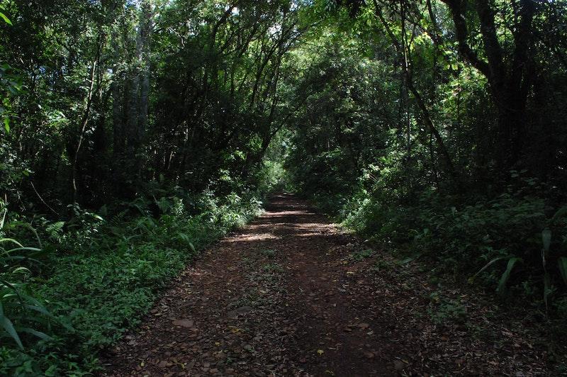 destino seguro - Camino Selvatico